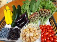 色や味が濃い有機栽培の野菜